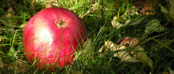 Der Apfel als Symbol für unseren Lebensunterhalt